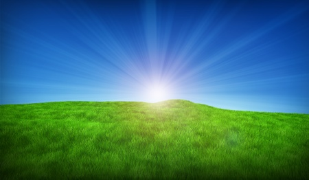 Green meadow on a sunny day Stock Photo