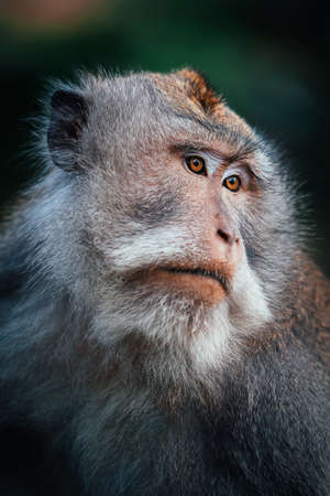 Monkey family in monkey forest in Bali, Indonesia