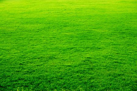 Fondo verde hierba Foto de archivo - 48598624