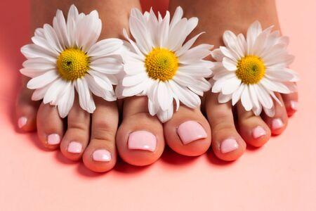 Piedi di una ragazza nei boccioli di fiori di margherite, pedicure rosa su sfondo rosa. Vista dall'alto con posto per il testo.