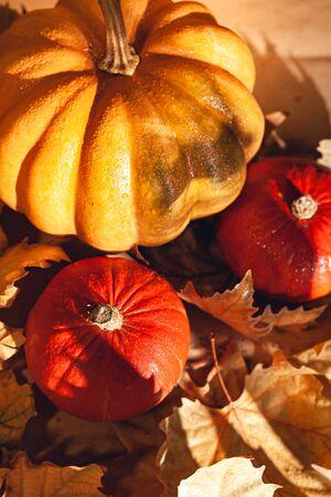 Banner de calabazas de acción de gracias en otoño follaje seco. Fotografía genérica de una calabaza solar - Concepto de cosecha / acción de gracias.