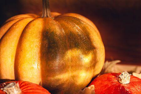 Banner of Thanksgiving pumpkins on autumn dry foliage. Stock photo of a solar pumpkin - Harvest / Thanksgiving Concept. Standard-Bild - 133244687