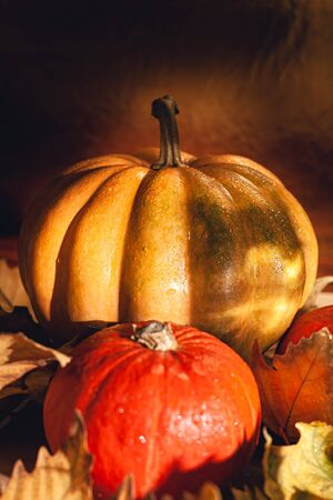 Banner of Thanksgiving pumpkins on autumn dry foliage. Stock photo of a solar pumpkin - Harvest / Thanksgiving Concept. Standard-Bild - 133243858