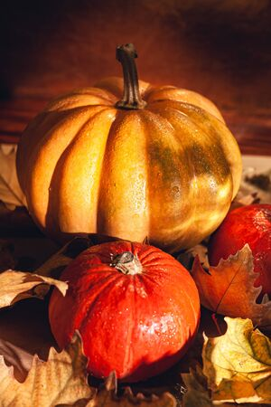 Banner of Thanksgiving pumpkins on autumn dry foliage. Stock photo of a solar pumpkin - Harvest / Thanksgiving Concept. Standard-Bild - 133243880