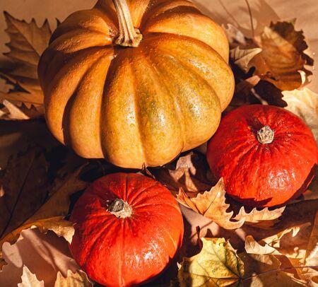 Banner of Thanksgiving pumpkins on autumn dry foliage. Stock photo of a solar pumpkin - Harvest / Thanksgiving Concept. Standard-Bild - 133243893