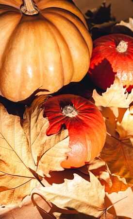 Autumn composition of pumpkins and yellow leaves. Stock photo of pumpkins on dry leaves. Standard-Bild - 134079952