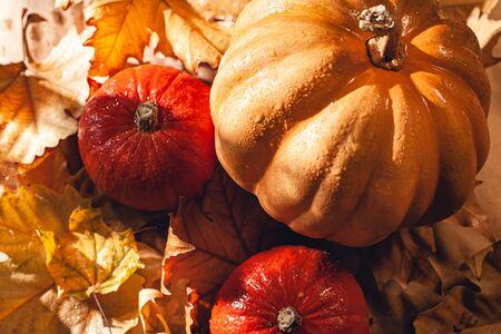 Banner of Thanksgiving pumpkins on autumn dry foliage. Stock photo of a solar pumpkin - Harvest / Thanksgiving Concept. Standard-Bild - 133243711