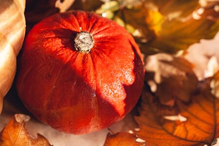 Banner of Thanksgiving pumpkins on autumn dry foliage. Stock photo of a solar pumpkin - Harvest / Thanksgiving Concept. Standard-Bild - 133243724