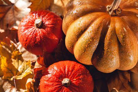 Banner of Thanksgiving pumpkins on autumn dry foliage. Stock photo of a solar pumpkin - Harvest / Thanksgiving Concept. Standard-Bild - 133244502