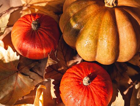 Banner of Thanksgiving pumpkins on autumn dry foliage. Stock photo of a solar pumpkin - Harvest / Thanksgiving Concept. Standard-Bild - 133249163