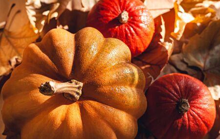 Banner of Thanksgiving pumpkins on autumn dry foliage. Stock photo of a solar pumpkin - Harvest / Thanksgiving Concept. Standard-Bild - 133249171
