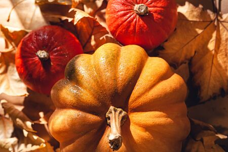 Banner of Thanksgiving pumpkins on autumn dry foliage. Stock photo of a solar pumpkin - Harvest / Thanksgiving Concept. Standard-Bild - 133249352