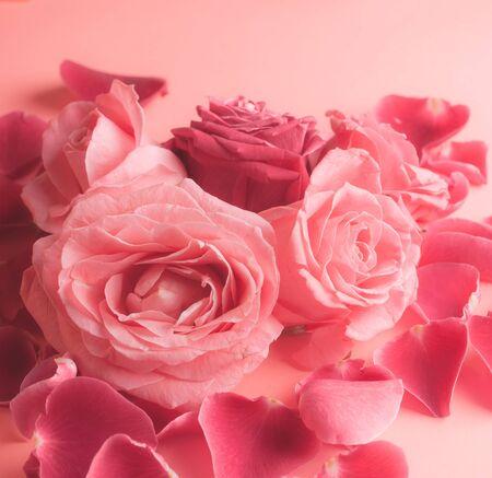 Photographie en gros plan de boutons de roses roses. Stock photo pour une carte.