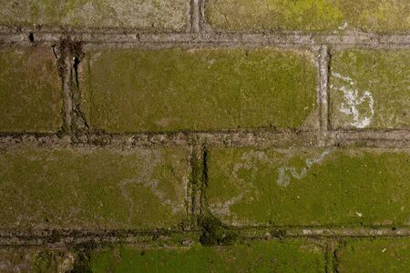 The brick wall is hit by green moss. Stock photo moss stricken brick texture background. Фото со стока