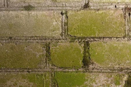 The brick wall is hit by green moss. Stock photo moss stricken brick texture background.