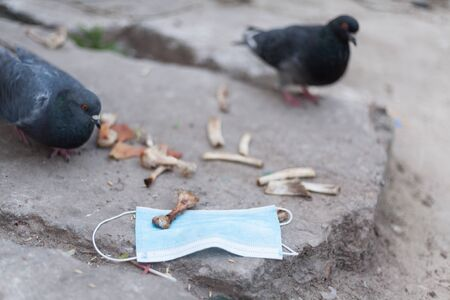 Medical mask and bird of the world. Dove and medical mask. The concept of nature pollution and the transmission of infection through birds. Global problems of coronavirus. Stock fotó