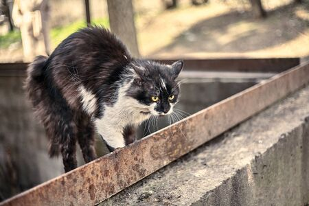 Frightened cat squeezed the body at the ready. Homeless dirty cat scared when he saw a dog. Spotted cat close-up. Stock photo.