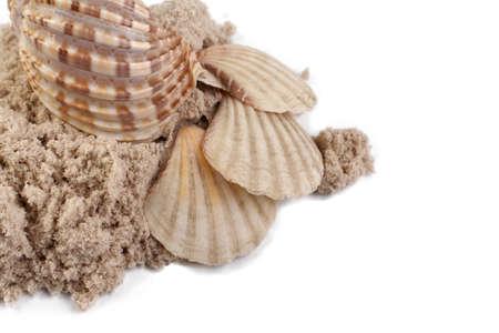Seashells and sand isolated on white background.