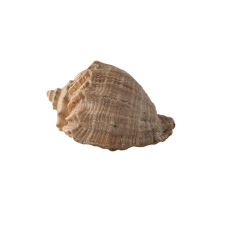 Seashell isolated on white background. Stok Fotoğraf