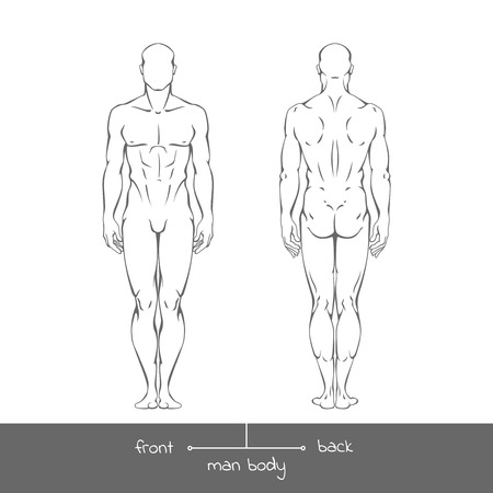 male model torso: Healthy young man from front and back view in outline style. Male muscular body shapes linear illustration with the inscription: front and back.