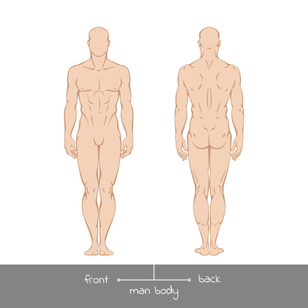Muscular young man from front and back view. Healthy male body shapes outline colored illustration with the inscription: front and back. illustration of a human figure in linear style