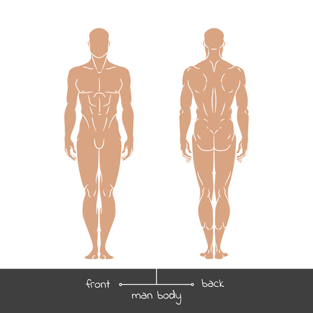 Healthy young man from front and back view. Male muscular body shapes outline vector concept illustration with the inscription: front and back. Vector illustration of a human figure in linear style. Ilustração