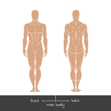Joven sano de la vista frontal y posterior. Hombre formas contorno corporal ilustración vectorial concepto muscular con la inscripción: parte delantera y trasera. Ilustración vectorial de una figura humana en estilo lineal. Foto de archivo - 56584050