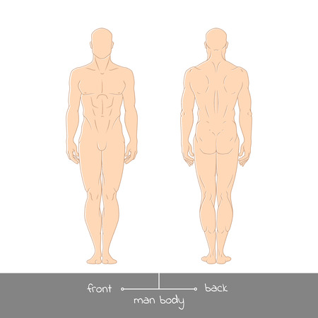 naked male: Healthy young man from front and back view. Male muscular body shapes colored outline vector illustration with the inscription: front and back. Vector illustration of a human figure Illustration