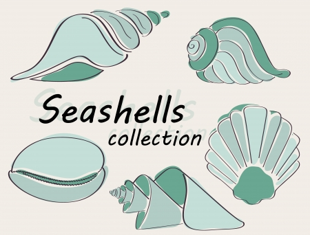 conch: Collection of seashells drawn in astract way in vector