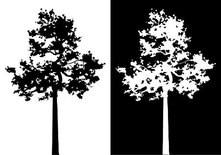albero pino: Sumatra pino silhouette vettore. Vettoriali