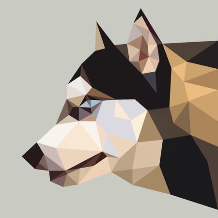 �siberian husky�: Siberian husky low polygon.