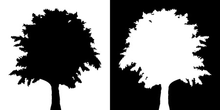 pine boughs: Tree vector silhouette
