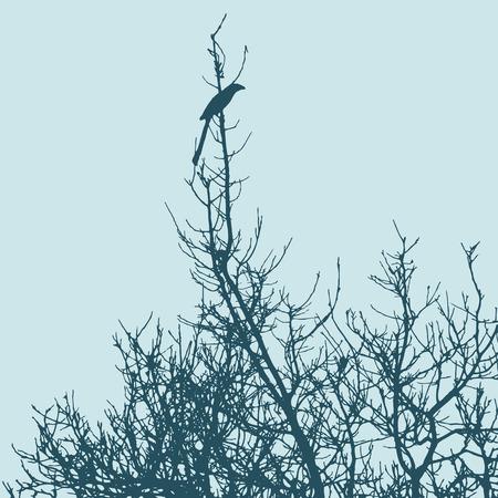 a bough: Black Drongo silhouette on blue sky