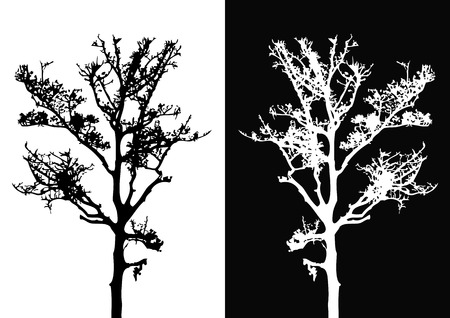 a bough: Tree isolated vector