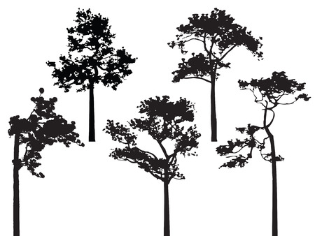 Set of five pine tree silhouette vector Illustration