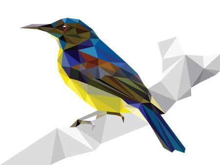 sunbird: Polygonal bird Yellow-bellied sunbird