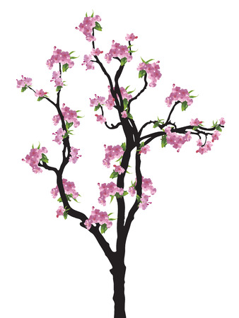 to bloom: Full bloom sakura tree (Cherry blossom) Illustration