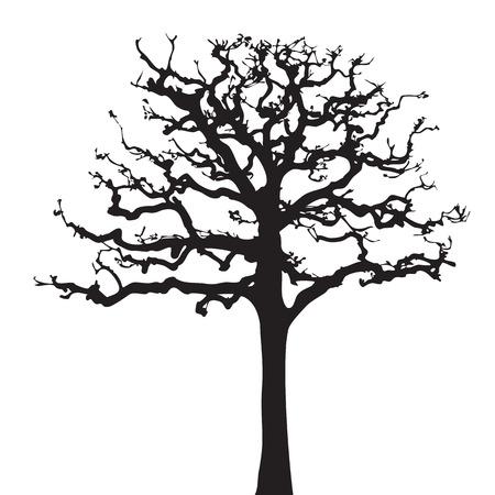bough: Tree twig silhouette