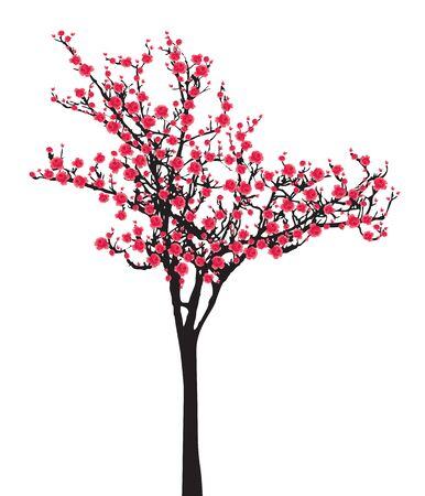 Een roze volle bloei sakura boom (Cherry Blossom) op een witte achtergrond