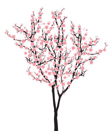 One pink full bloom sakura tree (Cherry blossom) isolated on white background Vettoriali