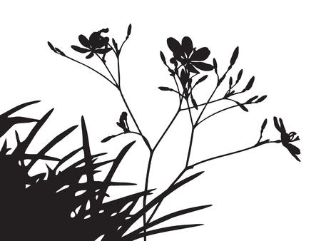 arbres silhouette: Ensemble de fleurs arbres silhouette, ombre noire forme herbe isolé sur blanc, mince usine de branche