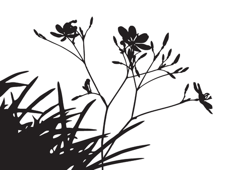 trees silhouette: Set of flower trees silhouette, black shadow grass shape isolated on white, thin twig plant