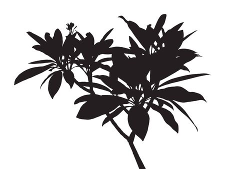 basic figure: Tree isolated vector, black shadow leaf, bush outline forest, gray plant shape, foliage contour, botany silhouette