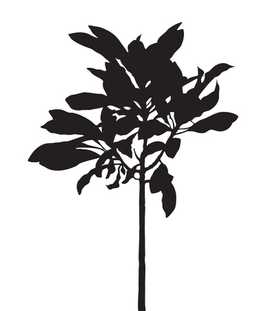 a bough: Tree isolated vector, black shadow leaf, bush outline forest, gray plant shape, foliage contour, botany silhouette