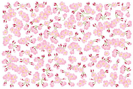 Full bloom pink sakura tree (Cherry blossom) isolated on white, flower backdrop, flora banner vintage, floral pattern