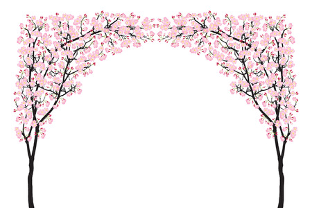 Full bloom pink sakura tree arch (Cherry blossom) curve black wood isolated on white, arc door facade, flower backdrop, flora banner vintage
