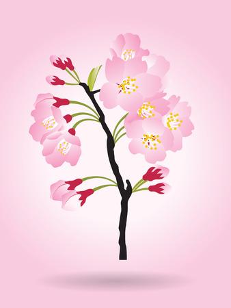 panicle: Full bloom pink sakura tree bush (Cherry blossom) black wood isolated on pink Illustration