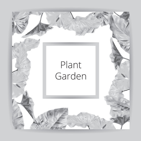 Big flat leaf grey textbox isolated on white background, gray line square package, fresh palm treetop border, leafy Araceae plant tree frame, large fern Colocasia esculenta foliage label box template. Illustration