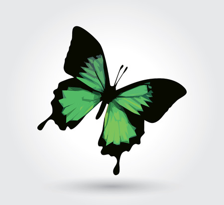 Low polygon green butterfly isolated on white background, fresh wings insects flying. Logo icon geometric. Bug polygonal crystal style.