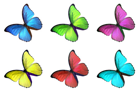 Set of six colorful butterfly isolated on white background, yellow green blue red pink wings insects flying.